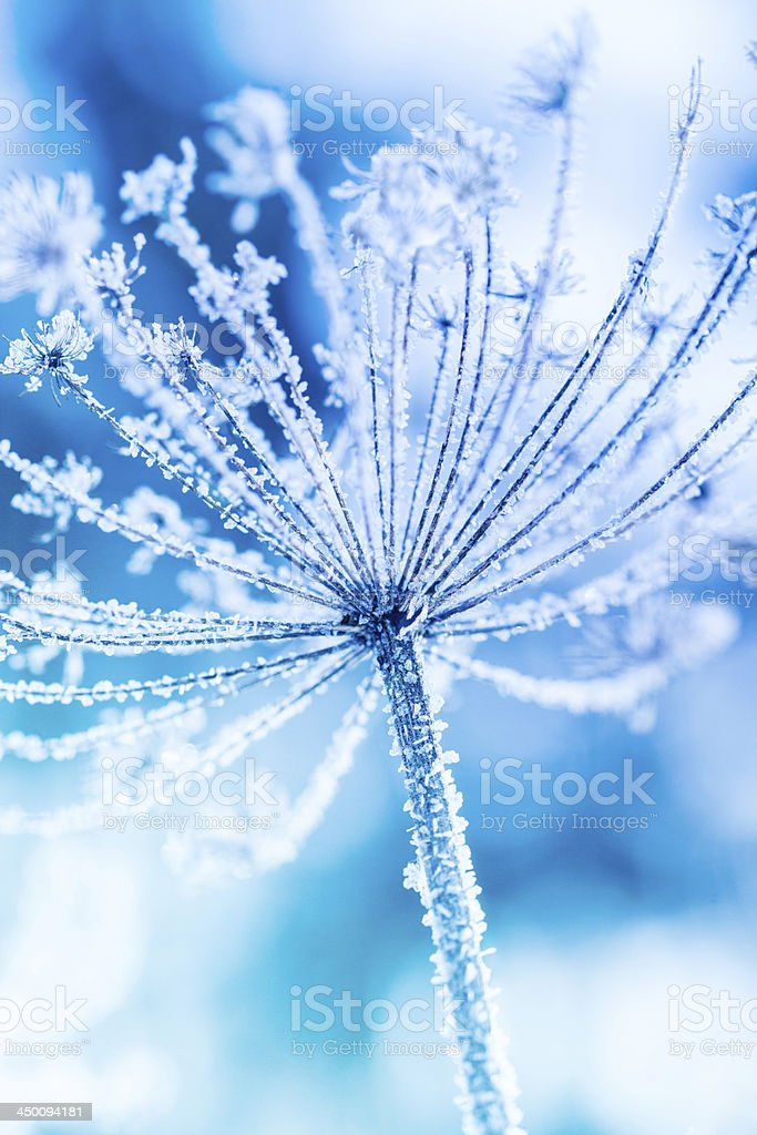 Ice covered plant close-up royalty-free stock photo