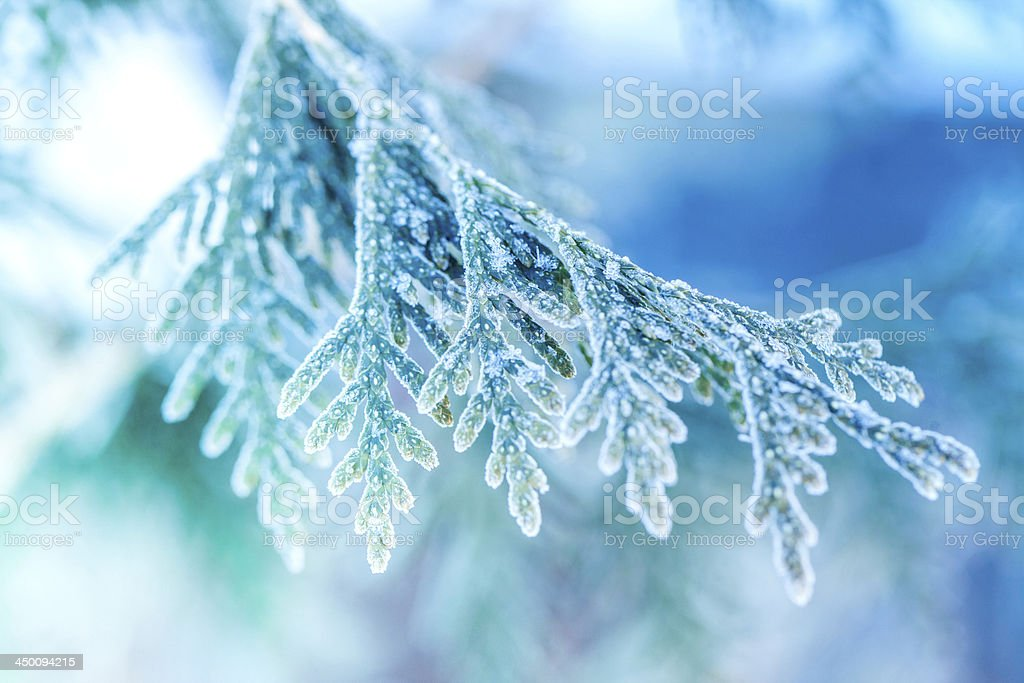 Ice covered plant close-up stock photo