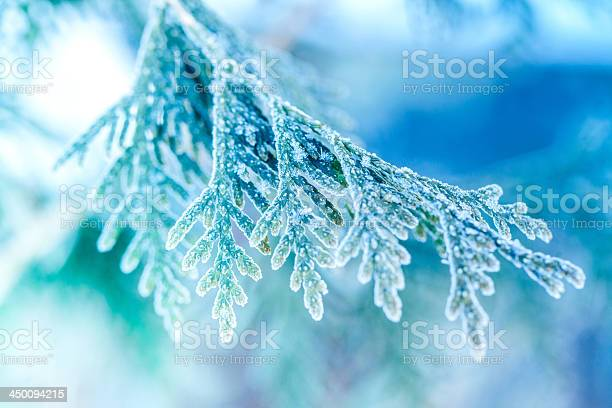 Photo of Ice covered plant close-up