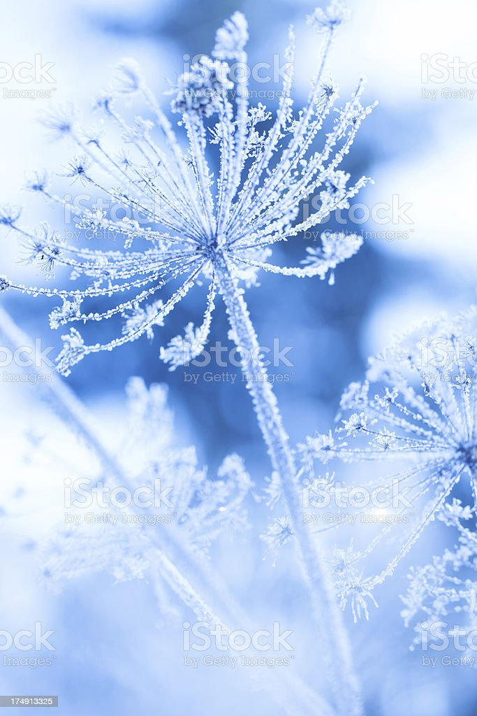 Ice covered plant in a winter garden stock photo