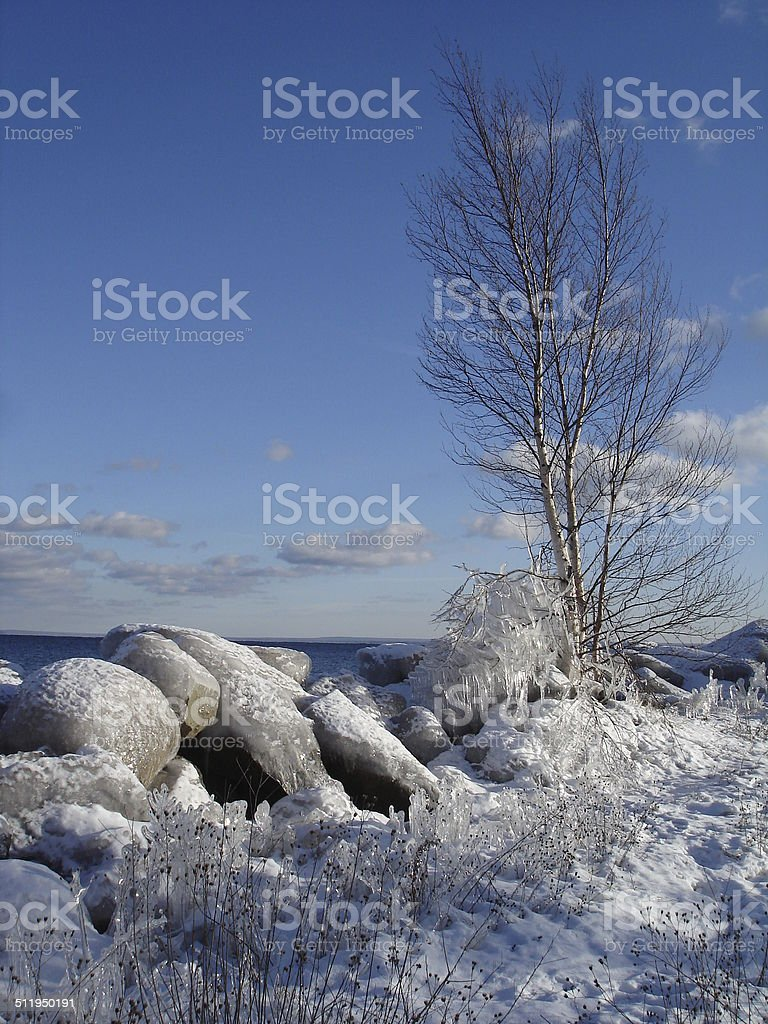 Ice covered tree,rocks and grass stock photo
