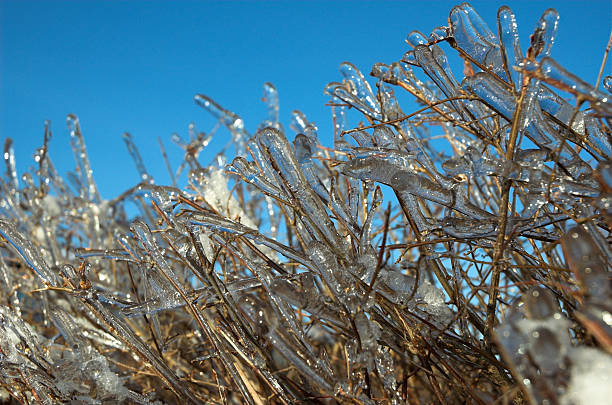 ice dressed branches - alintal stock pictures, royalty-free photos & images