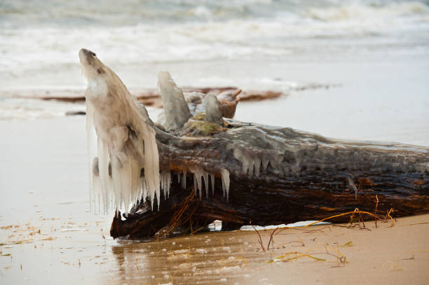Ice fish. Bark laying on the beach. Covered with ice. - foto de stock