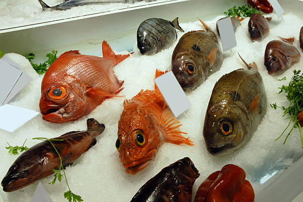 Ice-Fisch – Foto