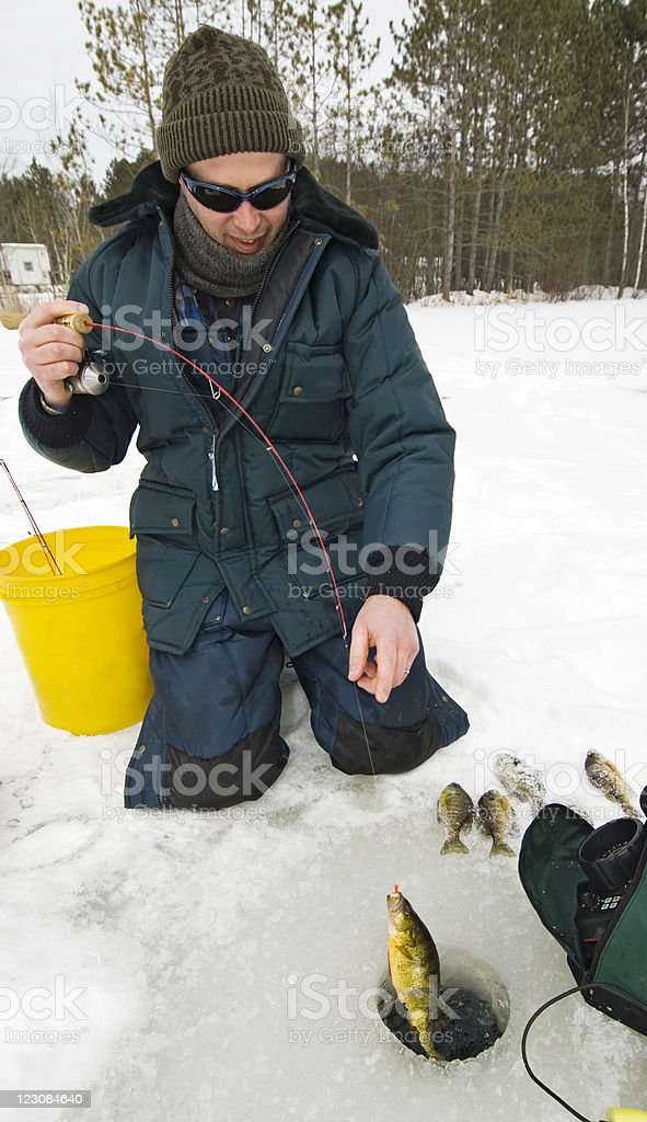 Ice Fisherman Catches Perch royalty-free stock photo
