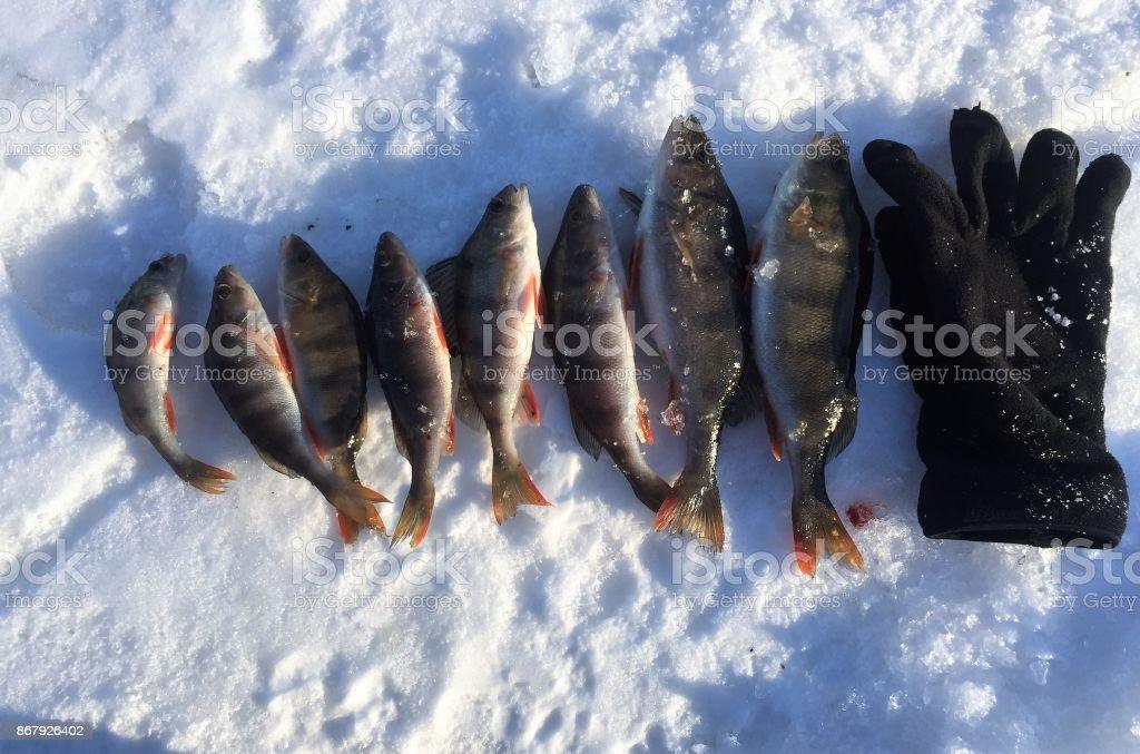 Ice fishing. Winter fishing stock photo