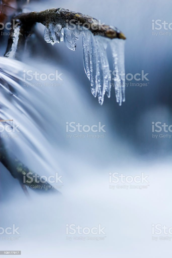 Ice Forming on Twig branch royalty-free stock photo