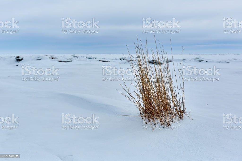 Ice hummocks Lake Balkhash photo libre de droits