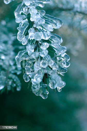 Pine tree branches covered with ice in cold tones