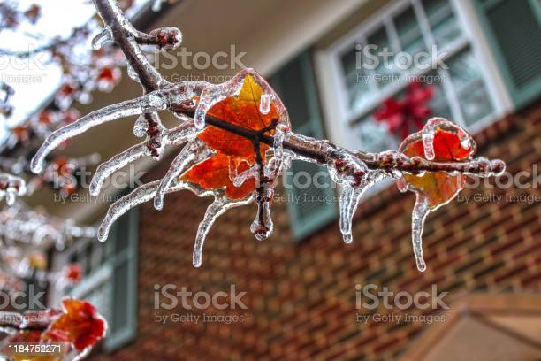 Photo of ice shouded colorful maple leaves on a branch with every point of the leaves an icicle - selective focus and bokeh background of two story house