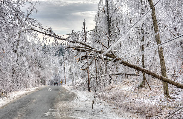 ice storm damage - blizzard stock photos and pictures