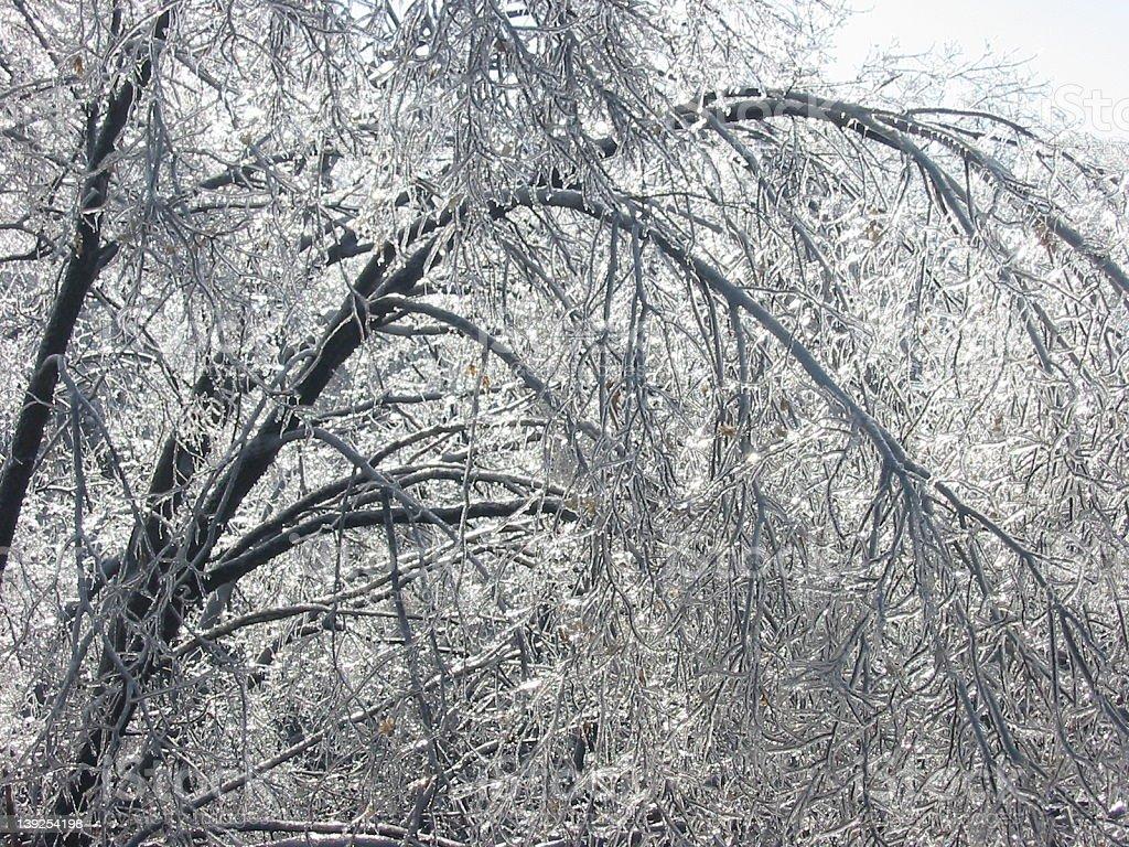 ice storm royalty-free stock photo