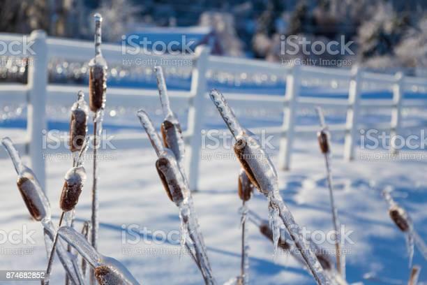 Photo of Ice Storm
