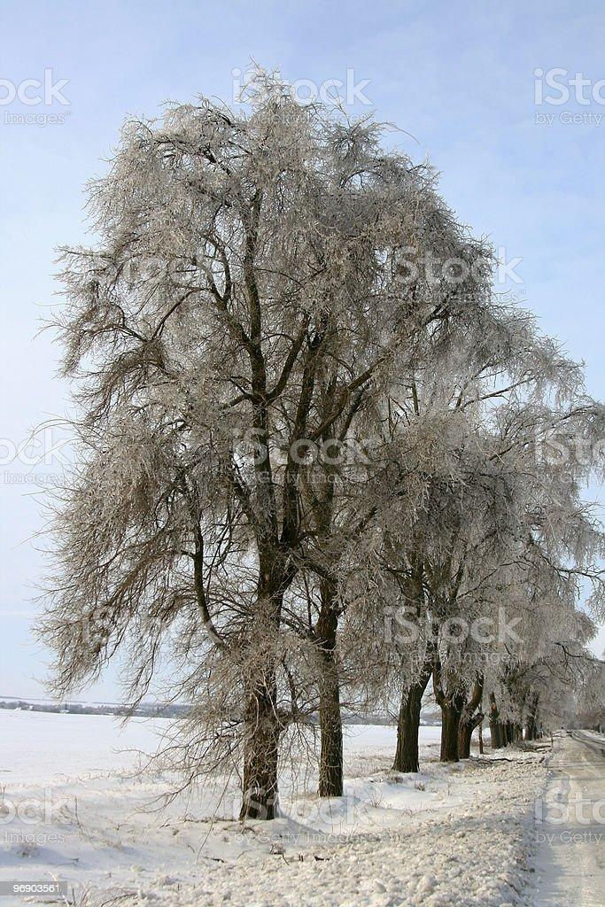 Ice trees royalty-free stock photo