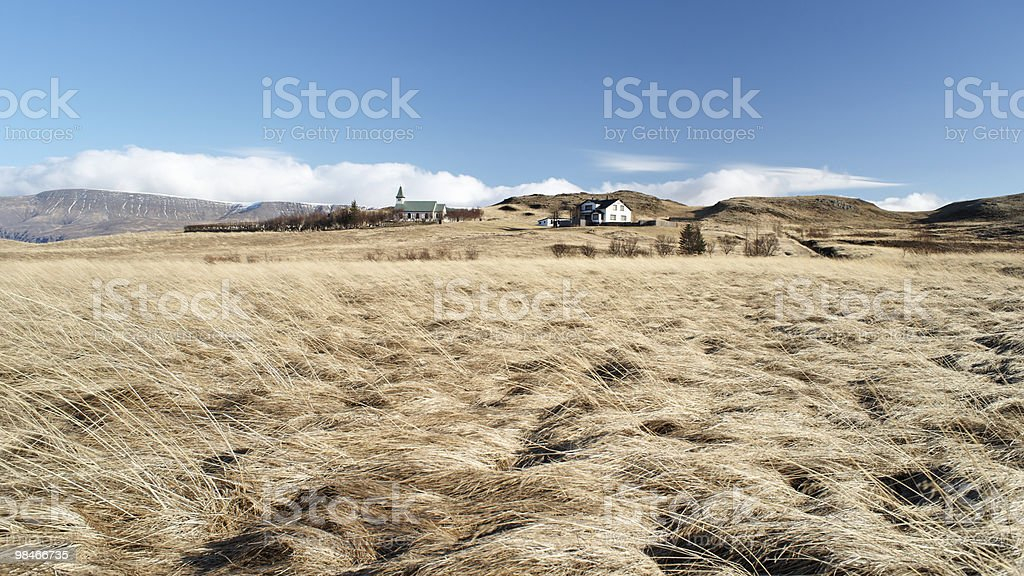 Icealand wheat field royalty-free stock photo