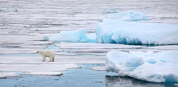 빙산 - 빙하 뉴스 사진 이미지