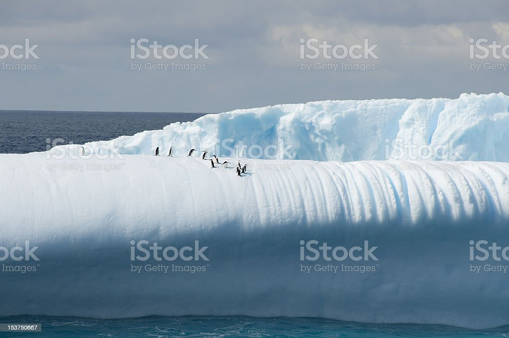 Iceberg with penguins royalty-free stock photo