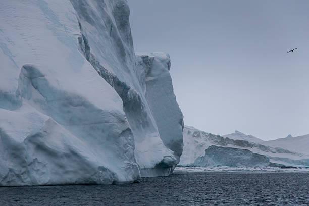Iceberg with seagull stock photo