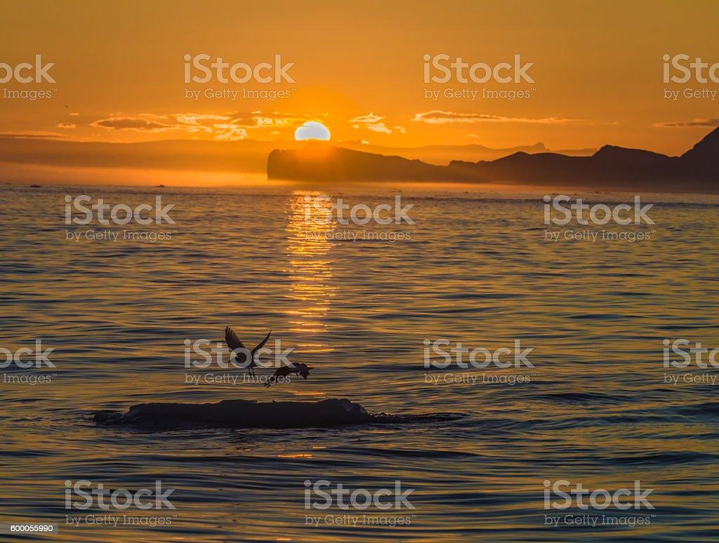 Icebergs and gulls in the midnight sun, Ilulissat, Greenland stock photo