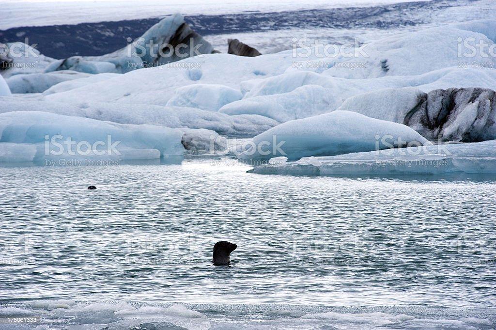 Icebergs in Jokulsarlon stock photo