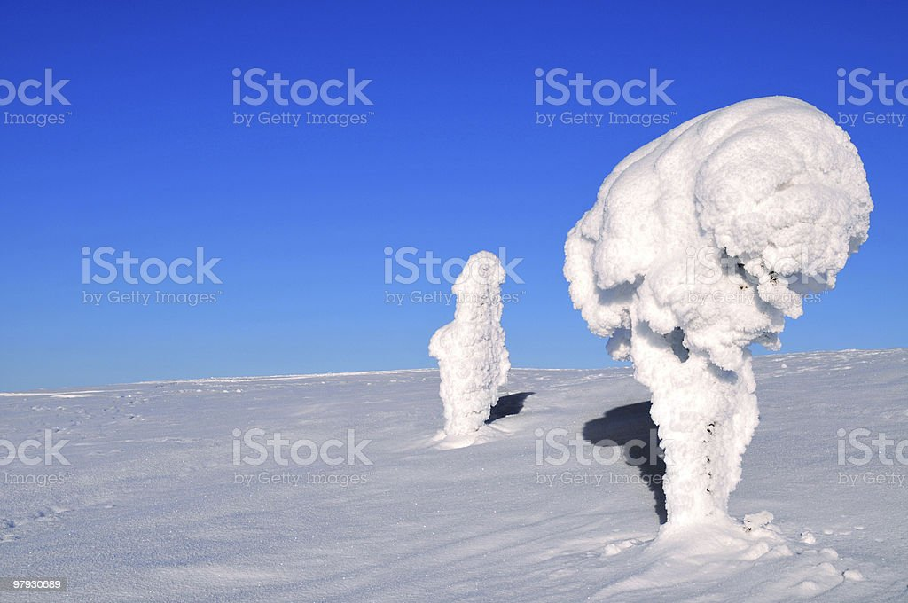 Ice-covered trees in the Arctic royalty-free stock photo
