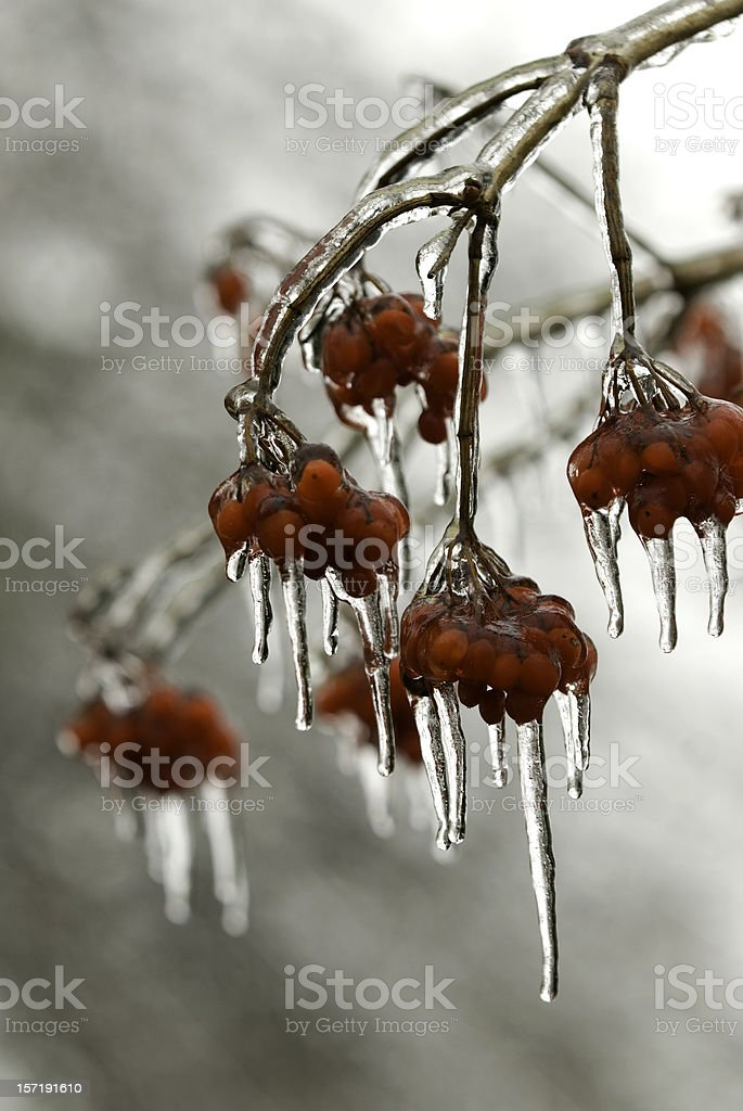 Iced Berries royalty-free stock photo