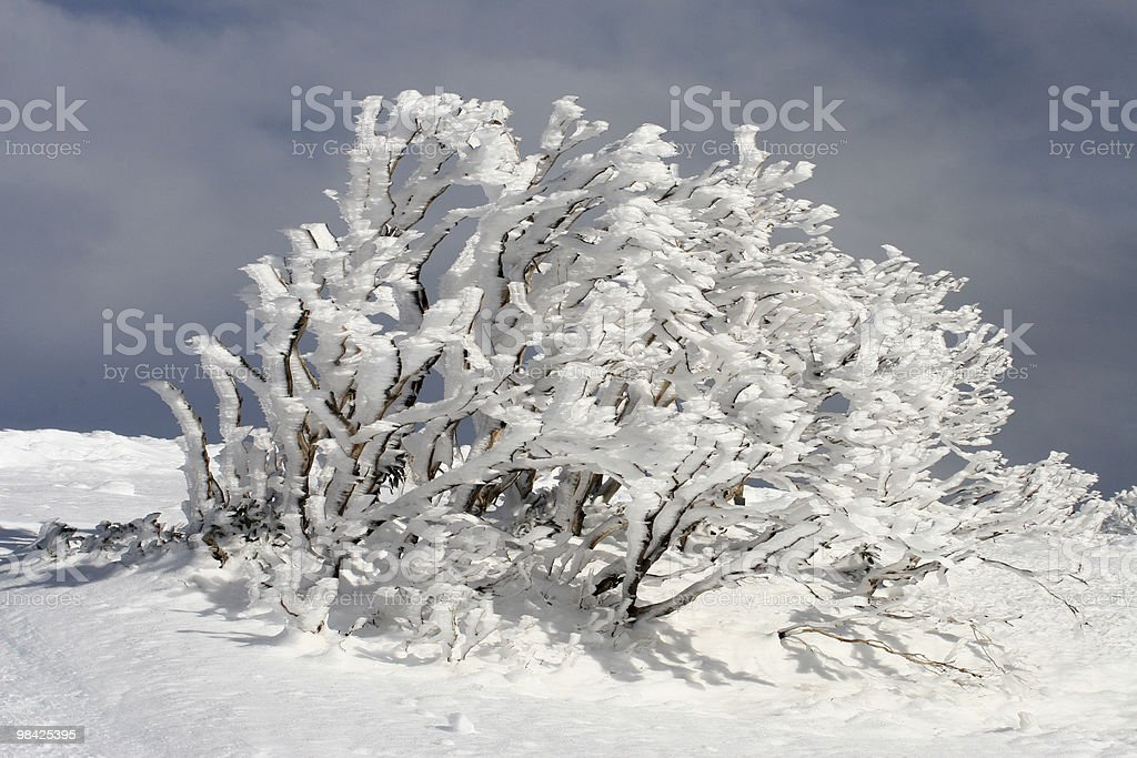 Iced Tree Background in the Snow royalty-free stock photo