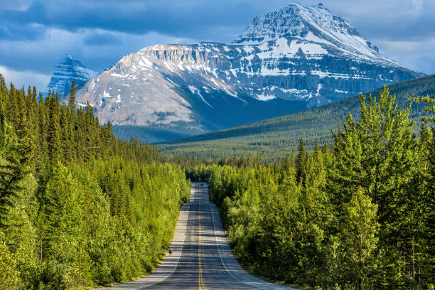 Icefields Parkway at Mount Sarbach - A Spring evening view of Icefields Parkway running through dense forest at base of Mount Sarbach, Banff National Park, AB, Canada. stock photo