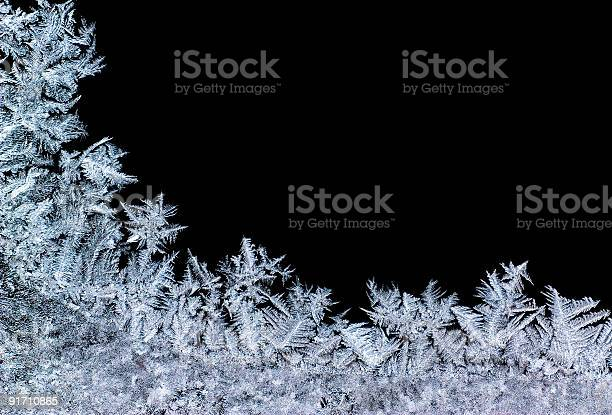 Photo of iceflower