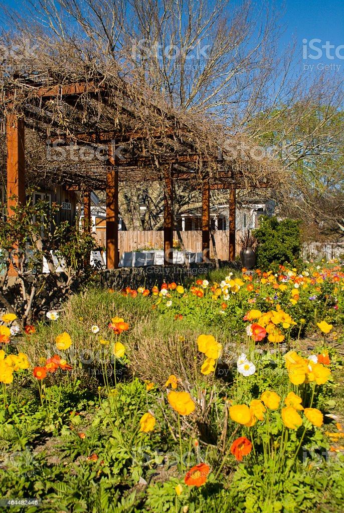 Iceland Poppies Veranda Old House Geyserville Sonoma County California stock photo