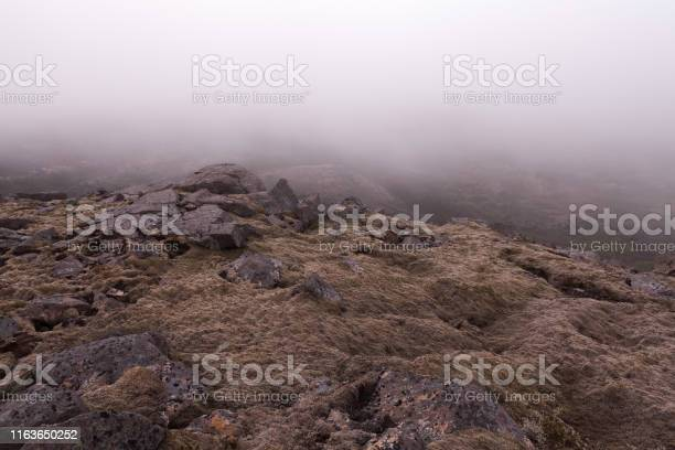 Photo of Iceland thick moss covered lava field in mist.