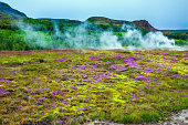 Travel to Iceland. Volcanic steaming hot field. Cloudy summer cold day. The concept of active, ecological and exotic travel