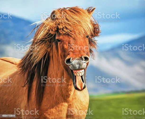 Icelandic horse smiling picture id469415844?b=1&k=6&m=469415844&s=612x612&h=6pibejhsvdsxaxfocpzsh7qwteqssoo7vfodmrnyc u=