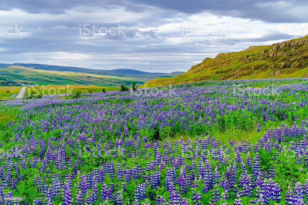 Icelandic landscape in summer stock photo
