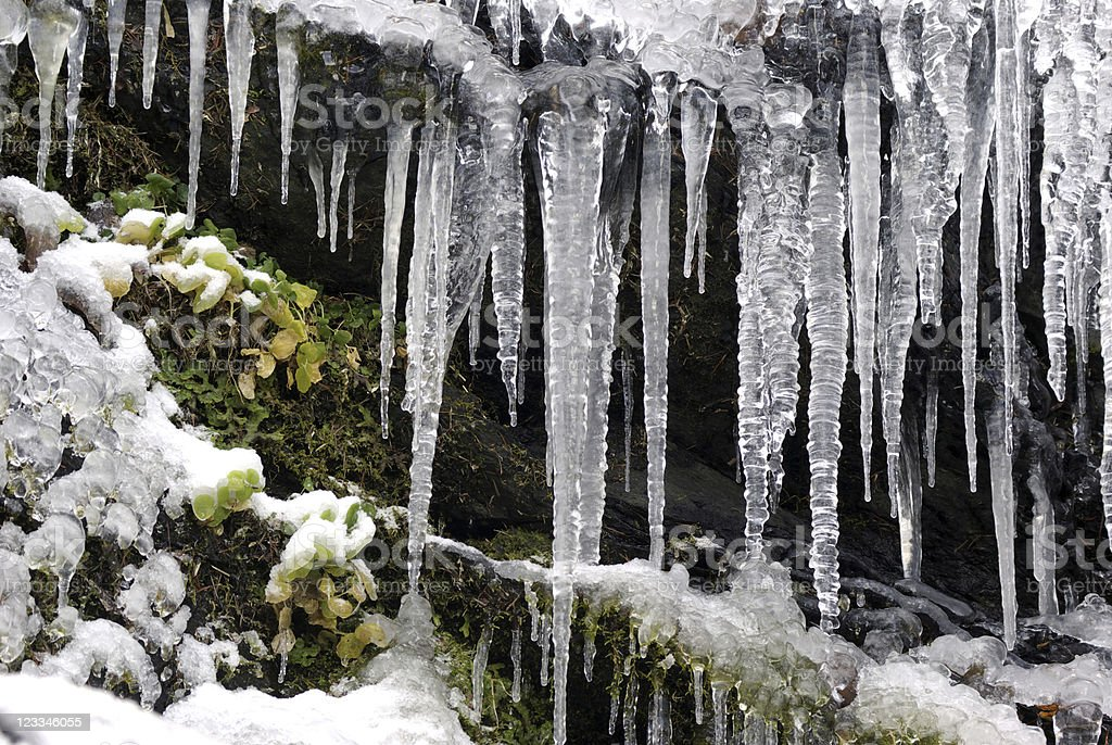 Icicle grass stock photo
