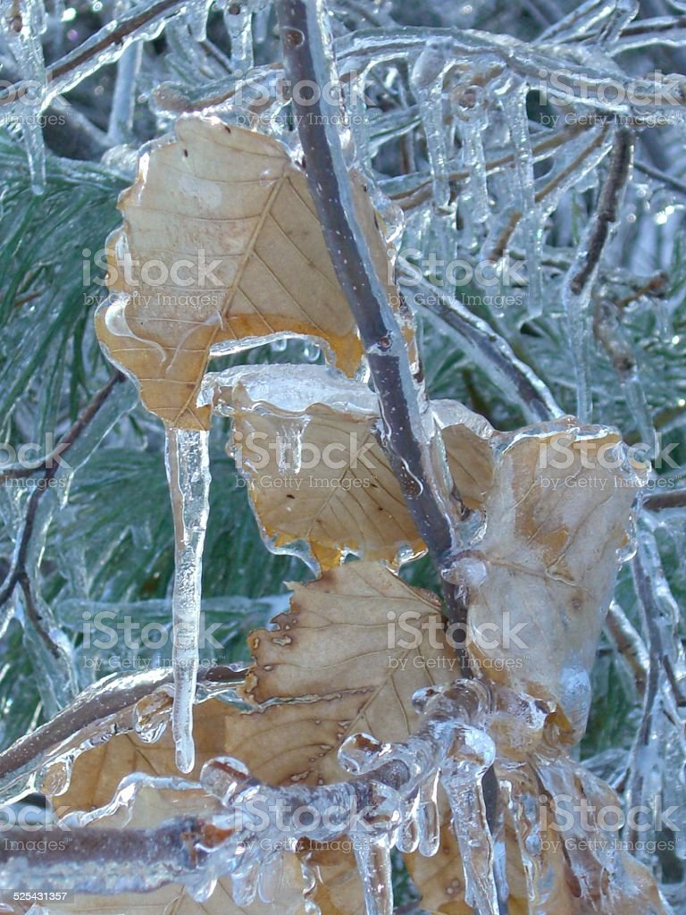 Icicles on Beech Leaves stock photo