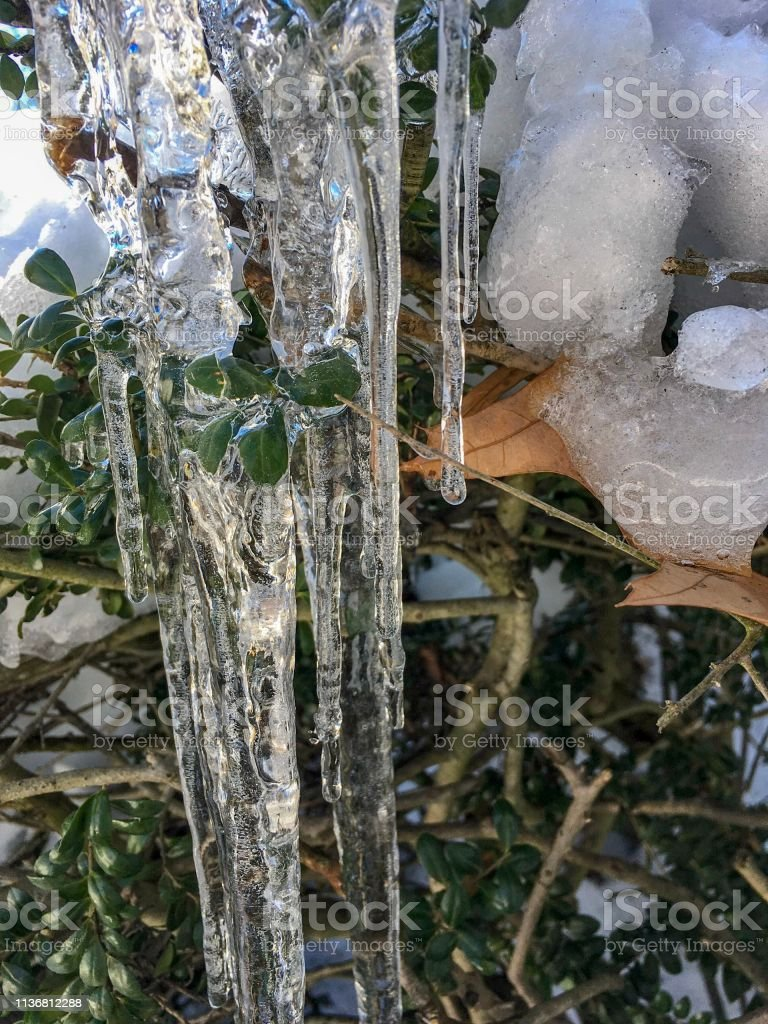 IMG_7084 Icicles on branches stock photo