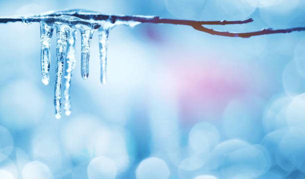Icicles on tree branch Spring bright background with icicles on  branch of  tree melting stock pictures, royalty-free photos & images