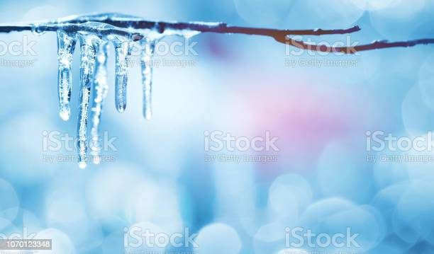 Photo of Icicles on tree branch