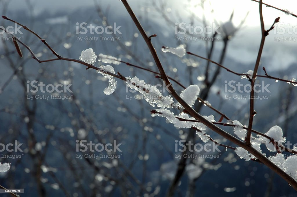 Icy Branch royalty-free stock photo