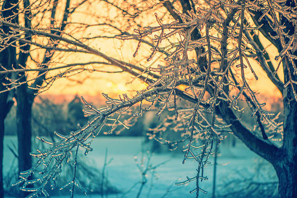 Icy Branches in the Glow of a Sunset - Retro stock photo