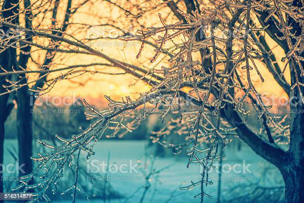 Photo of Icy Branches in the Glow of a Sunset - Retro