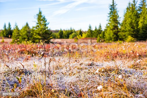 istock Icy frost on dry tall grass meadow illuminated by morning sunlight at Dolly Sods, West Virginia 839392326