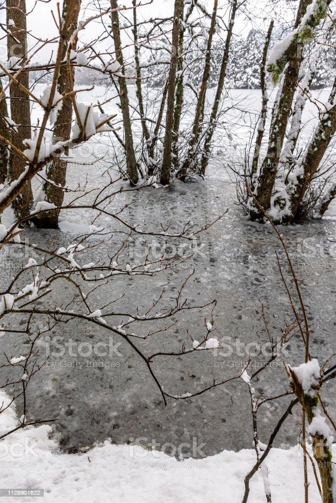 Icy Gölü ile ağaç ve kar stok fotoğrafı
