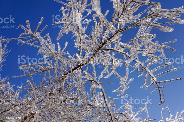 Photo of Icy tree branches in the sunlight