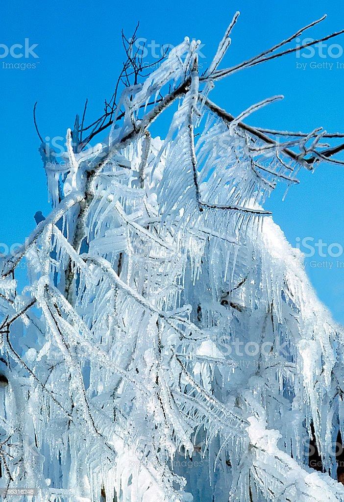 Icy Tree royalty-free stock photo