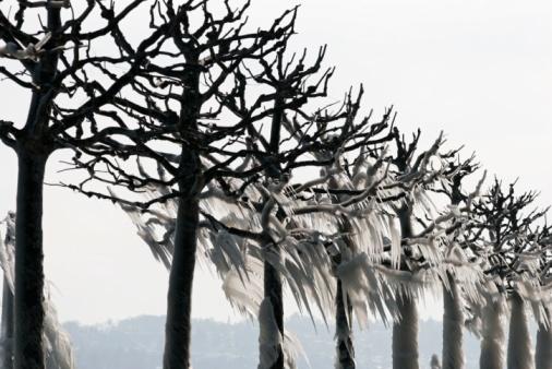 Icy trees in winter at lake Geneva