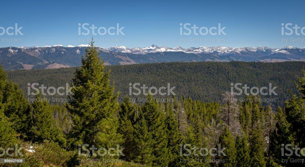Idaho forest and snowy White Cloud mountains Idaho stock photo