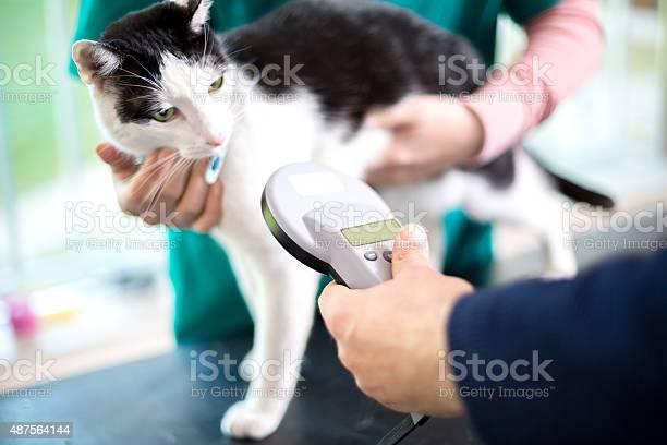 Identifying cat with microchip device picture id487564144?b=1&k=6&m=487564144&s=612x612&h=tgijbd gjorw06hlllvcqdmwlb8gsjsyrjzxrukoolc=