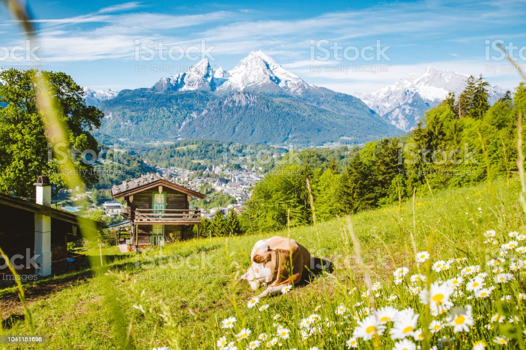 Idyllic Alpine Scenery With Mountain Chalets And Cow Grazing